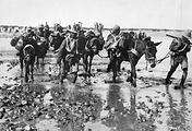 Солдаты колониальной пехоты и индийских подразделений британских войск в заболоченной местности в районе Багдада. 1918 год