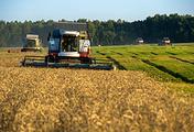 Уборка урожая озимой пшеницы в Новосибирской области