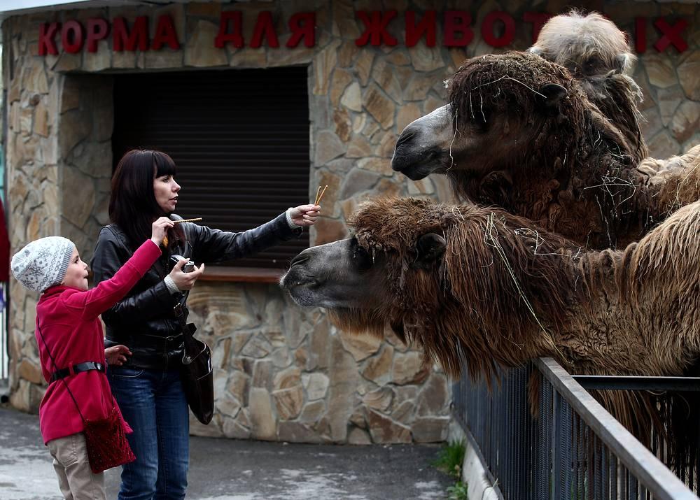 """Помимо львов и тигров в """"Тайгане"""" также живут жирафы, обезьяны, птицы и другие представители животного мира"""