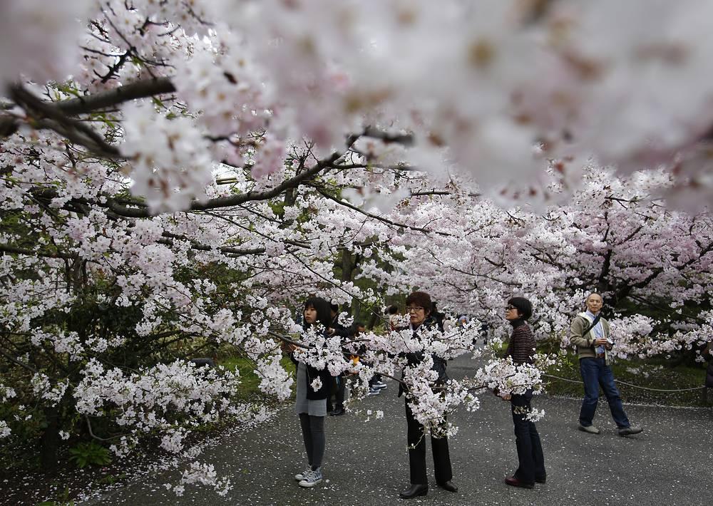 Возле рва Тидоригафути при Императорском дворце в Токио, Япония