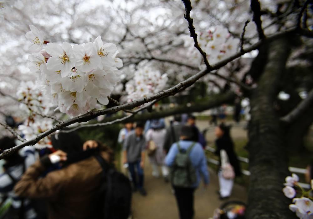 В парке при Императорском дворце в Токио, Япония