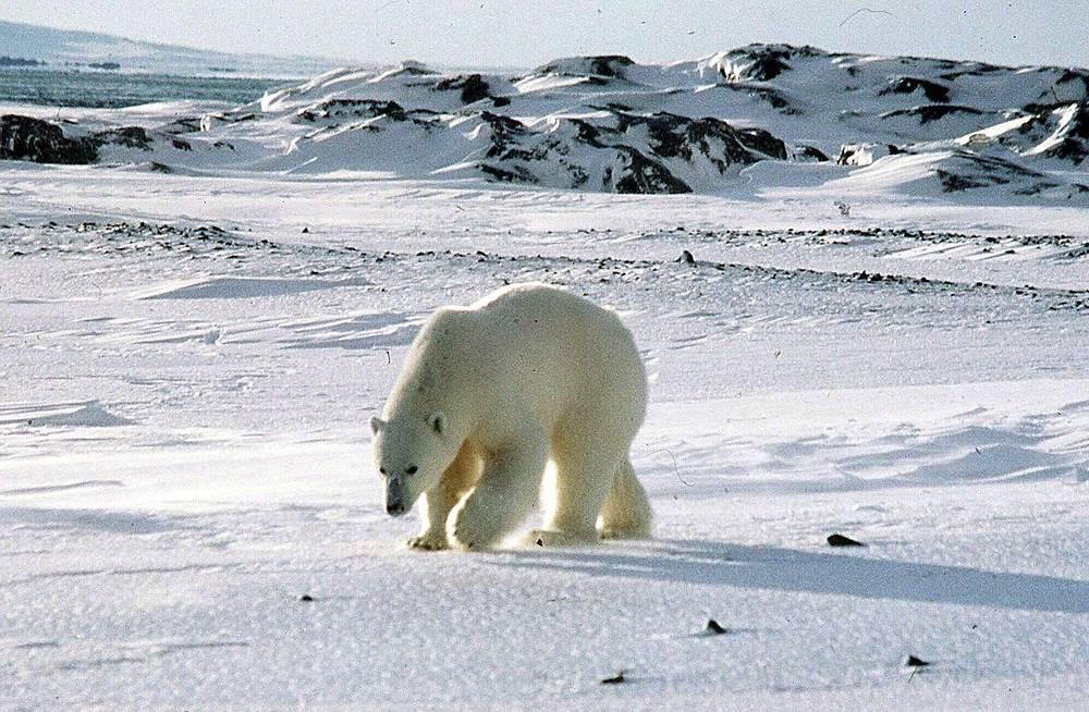 Воды архипелага богаты промысловыми видами животных - китами, белухами, моржами, тюленями, на суше обитают белые медведи, песцы, олени