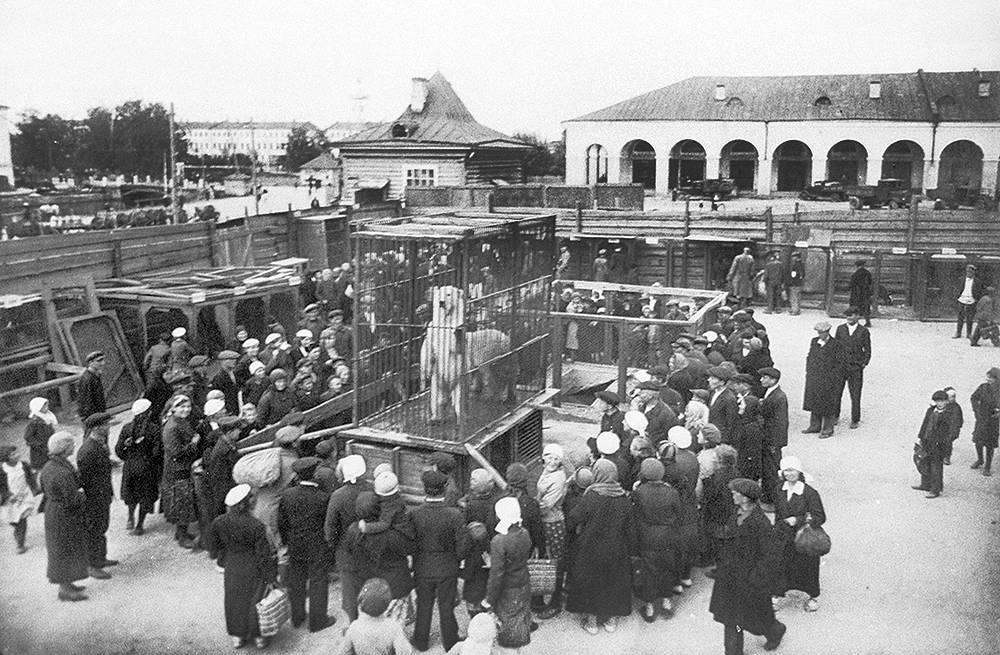 В просветительных целях петербургским зоосадом были созданы передвижные зоовыставки для демонстрации животных в городах и поселках, лишенных зоосадов. За весь период существования передвижных зоовыставок их посетило около 400 000 человек. На фото: передвижная зоовыставка, 1930-е годы