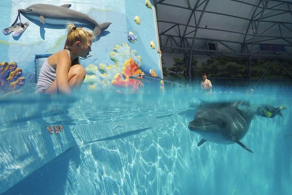 """Дельфин в бассейне дельфинария """"Акварель"""" в Алуште, 24 августа"""