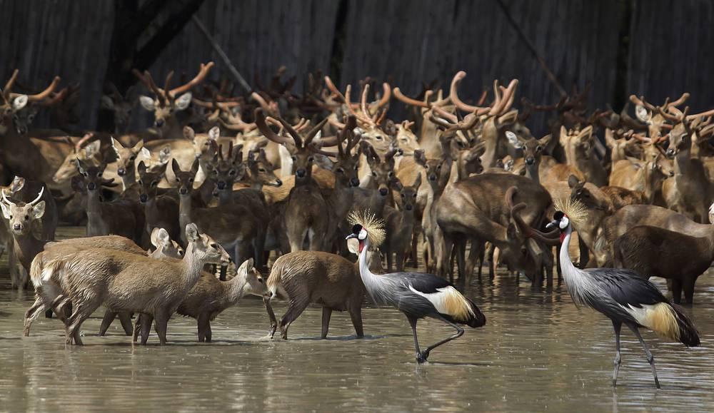 """Животные в парке """"Мир сафари"""" в Бангкоке во время наводнения, 4 ноября 2011 года"""