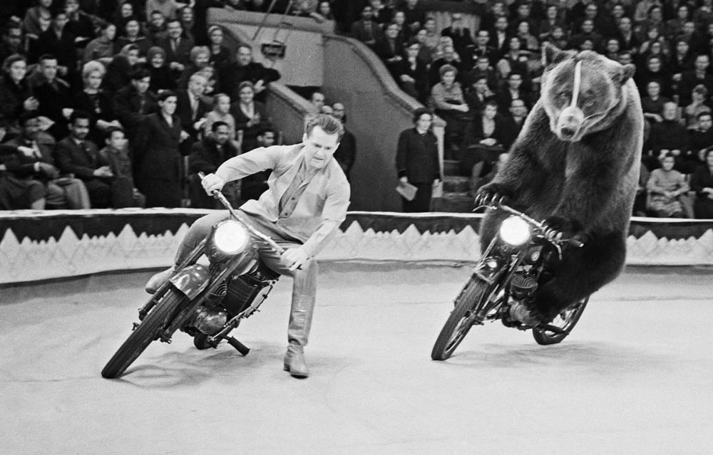 На арене цирка, 1964 год