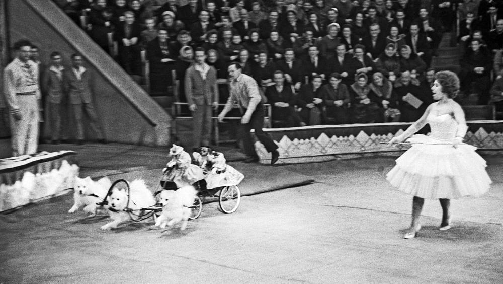Дрессировщики во время представления, 1964 год