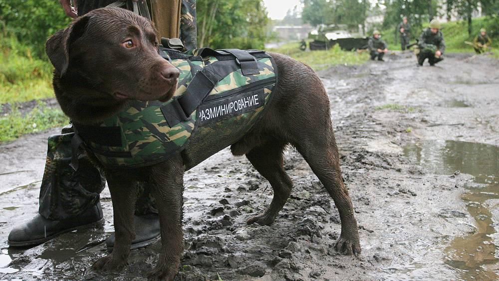 Собака в бронежилете
