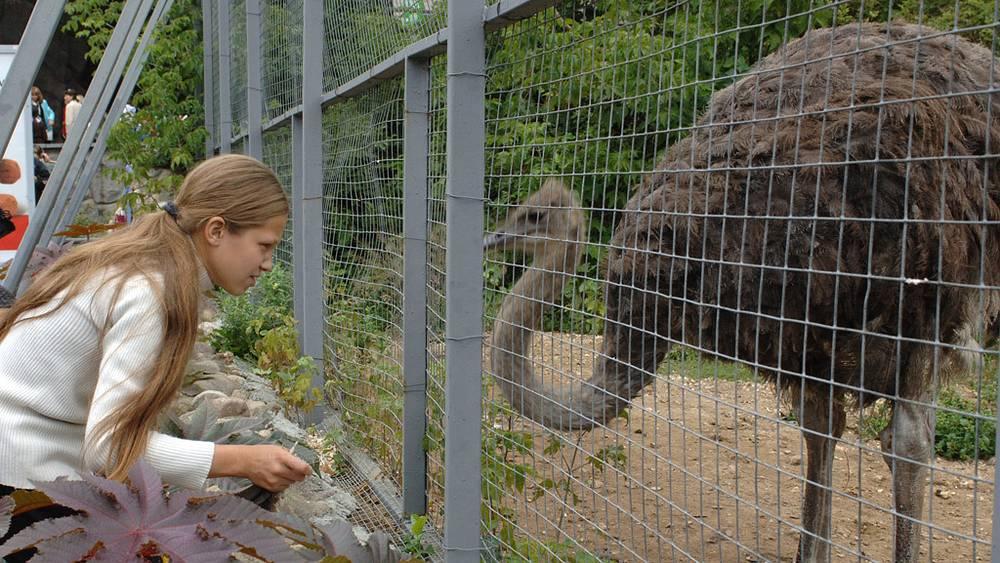 У клетки с африканским страусом
