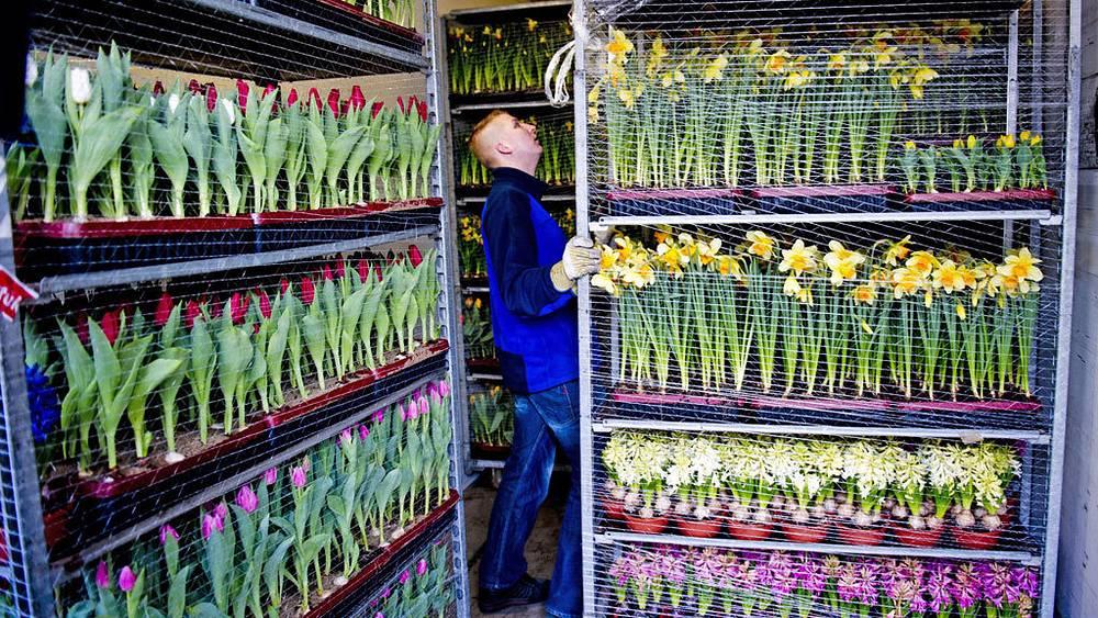 Подготовка цветов для пасхальной мессы в Ватикане