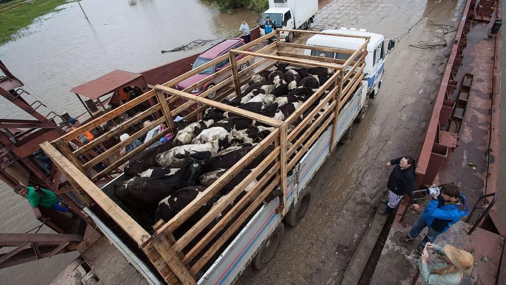 Наводнение в Хабаровском крае. Фото ИТАР-ТАСС/ Дмитрий Моргулис