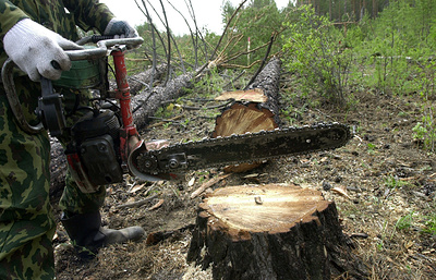 Молодые врачи, учителя и ветеринары смогут получать в Бурятии лес на строительство жилья