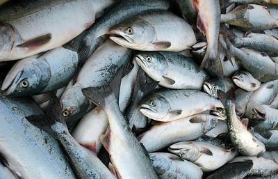 Глава Росрыболовства: рост ж/д-перевозок морепродуктов из ДФО позитивно сказался на ценах
