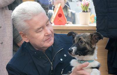 Собянин рассказал волонтерам о собаке, которую взял из приюта