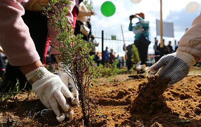 Собянин поддержал идею своих волонтеров сажать дерево в честь рождения ребенка