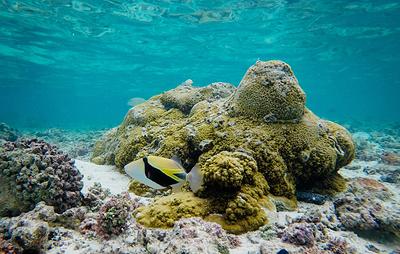 Ученые за четыре года нашли в дальневосточных морях сотни новых видов морских организмов