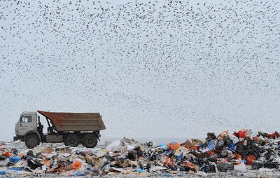 Утилизация мусора в России. Как реформируют отрасль