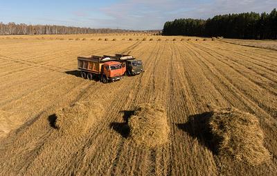 Минсельхоз не меняет прогноз по урожаю зерна в связи с ЧС с ряде регионов