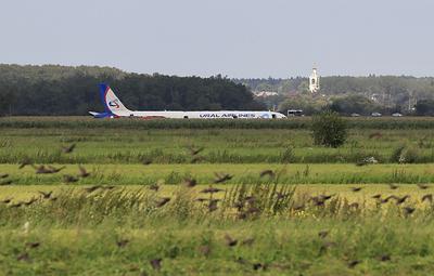 СК оценит работу ответственных за орнитологическую обстановку у аэропорта Жуковский