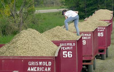 Россельхознадзор снимает запрет на поставки арахиса из США в Россию