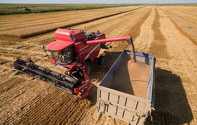 В правительстве прорабатывают предложения ВТБ о создании зернового холдинга