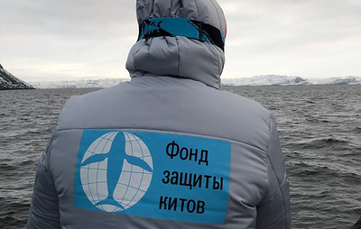 Экспедиция Фонда защиты китов встретила двух финвалов в Баренцевом море