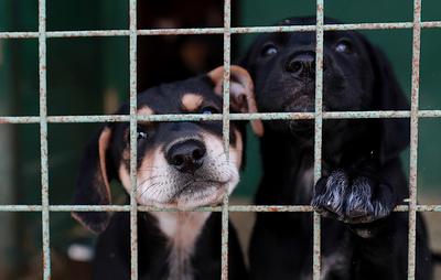 Более 2 тыс. собак и 800 кошек забрали москвичи из муниципальных приютов в 2019 году