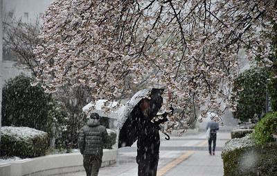 В Токио впервые за 10 лет в конце марта выпал снег