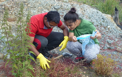 Бактерии, найденные в клеверах рядом с медным комбинатом на Урале, помогут очистить почву