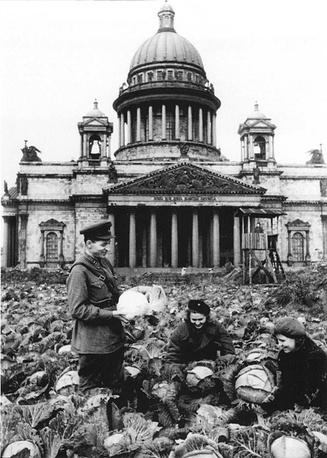 Сбор урожая капусты у Исаакиевского собора. 1942 г.