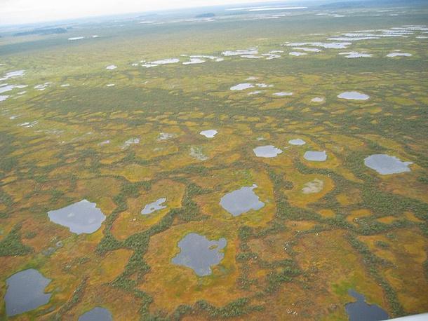 Васюганские болота предложены в список в 2007 году. Болота возникли в Западной Сибири около 10 тысяч лет назад. Они являются основным источником пресной воды в регионе. Кроме того, на Васюганских болотах обитают животные, занесенные в Красную книгу