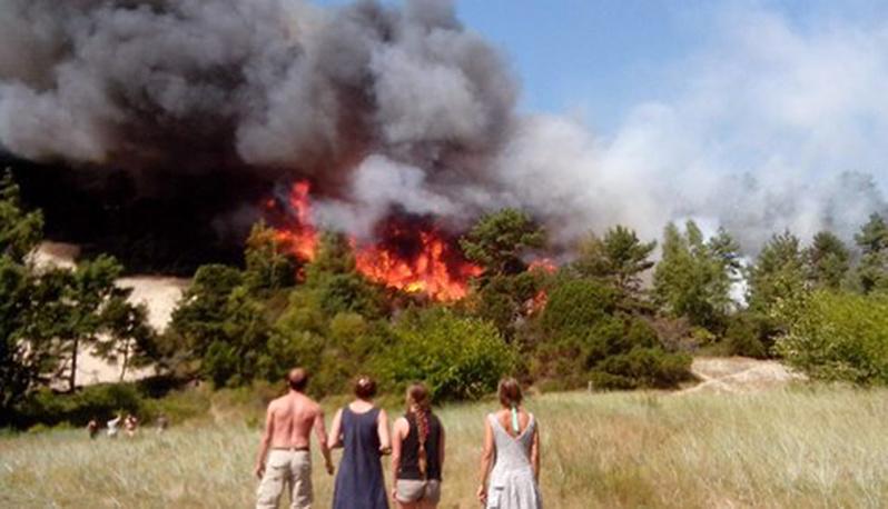 Лесной пожар в районе поселка Морское Зеленоградского района