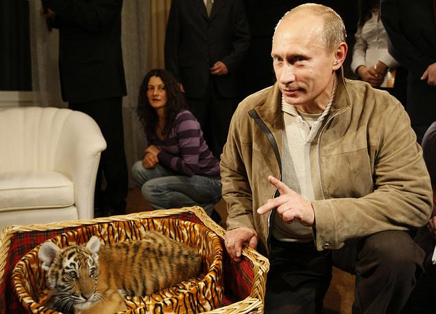 В 2008 году Владимиру Путину подарили двухмесячного тигренка, которого он передал в зоопарк