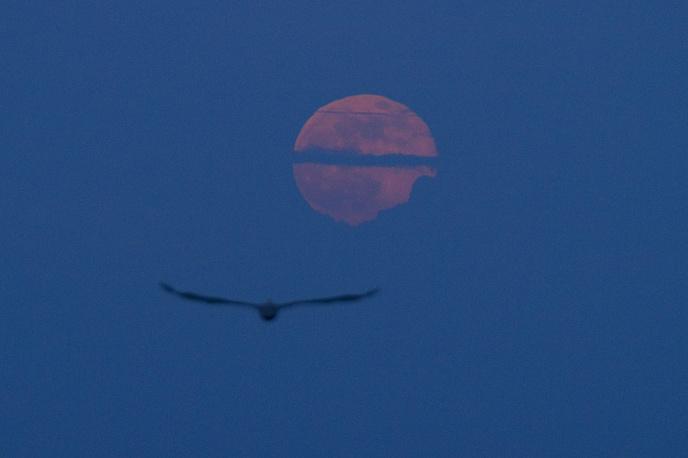 Восход полной луны в Санто-Доминго, Доминиканская Республика