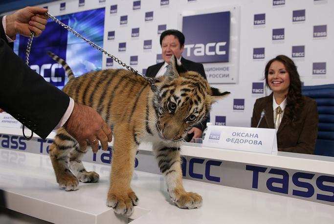 """Амурский тигренок по имени Мур стал прототипом нового персонажа """"Спокойной ночи, малыши!"""""""