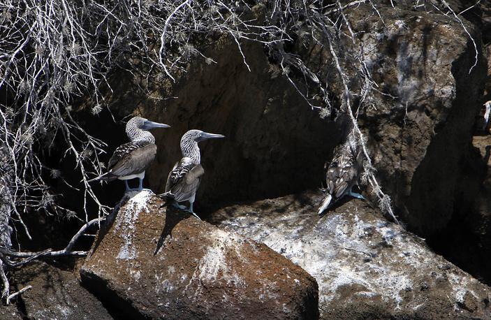 Болотные птицы