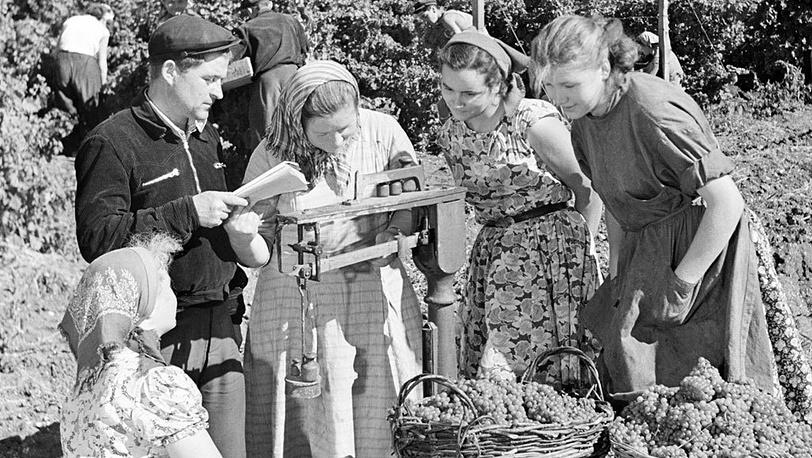 Сбор винограда, 1958 год. Фото ИТАР-ТАСС