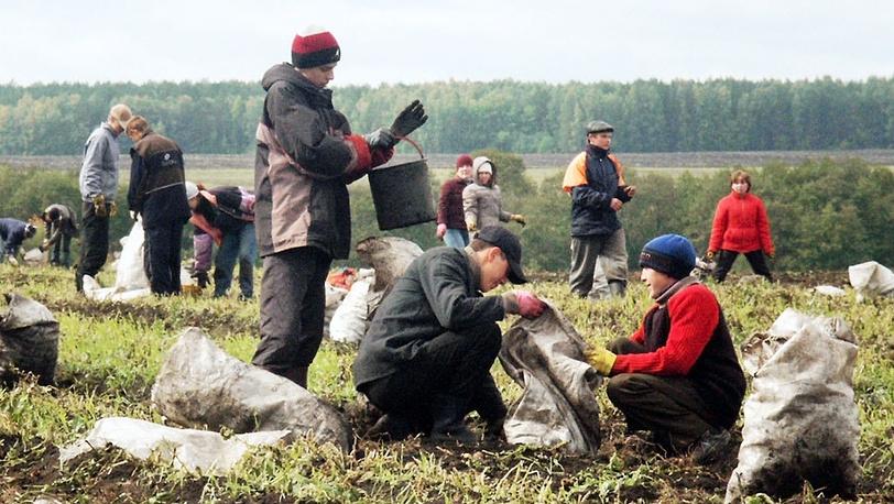Свердловские студенты на уборке картофеля на полях Камышловского района. 2004 год. Фото ИТАР-ТАСС/ Анатолий Семехин