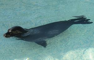 Центр реабилитации морских млекопитающих Ленинградской области.