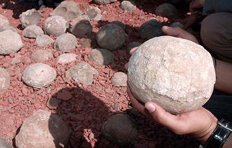 Архив. Окаменевшие яйца динозавров