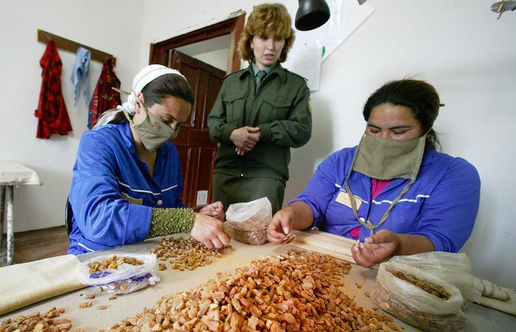 Женская колония в поселке Колосовка, Калиниградской области