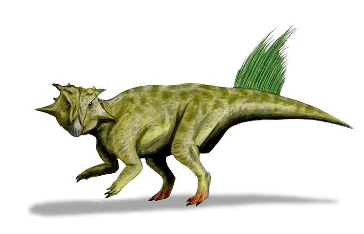 Пситтакозвар сибирский