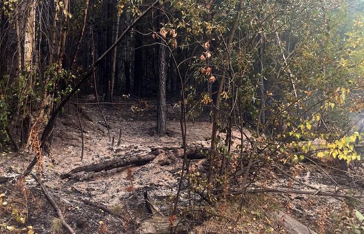 Последствия пожаров в Бурятии