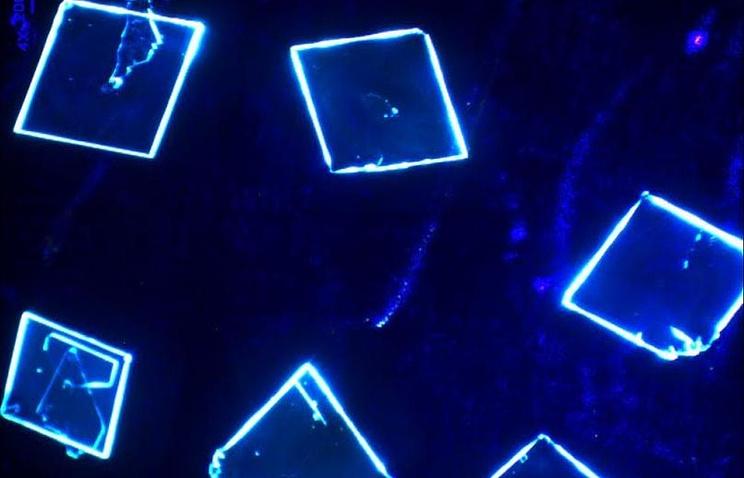 Сибирские ученые разработали материал для создания гибких дисплеев