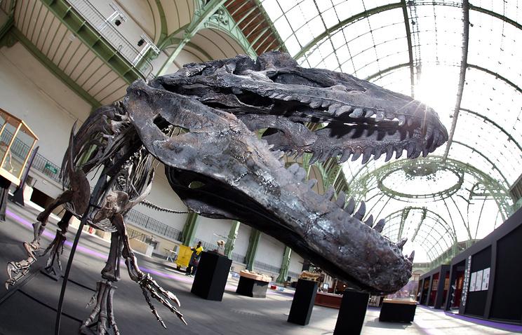 Нааукционе продали скелет динозавра больше, чем за1млневро