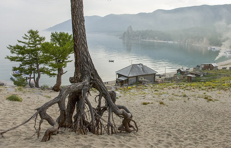 Суд запретил вырубку деревьев истройки около Сарайского залива