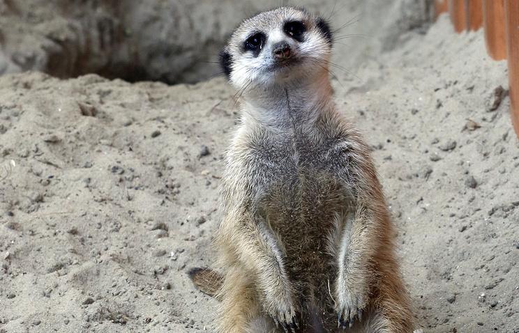 Вердикт засмерть зверей вконтактном зоопарке вынесли вНовосибирске