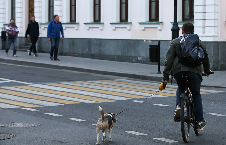 Государственная дума ужесточит штрафы для пешеходов занарушение ПДД