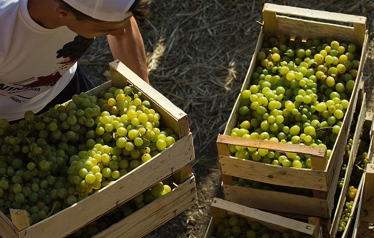 Виноделы попросили В.Путина ввести сборы наимпортное вино