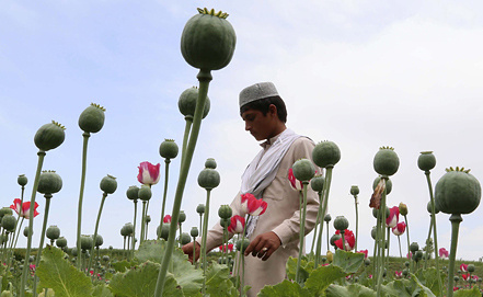 Маковые поля Афганистана, фото EPA/ИТАР-ТАСС